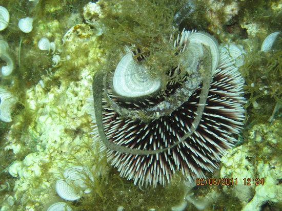 Agios Georgios, Grecia: underwater Corfu