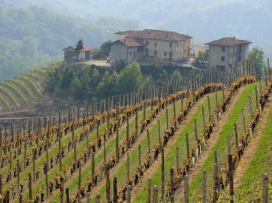 Locanda dell'Arco: Vineyards