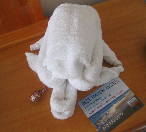 Rest Haven Motel: turtle