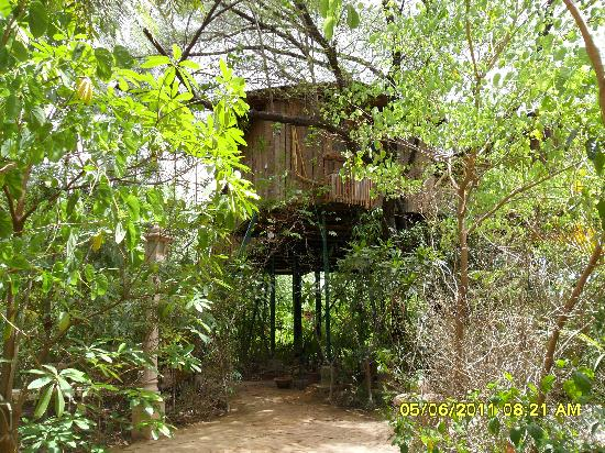 The Tree House Resort: the rooms from a distance