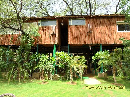 The Tree House Resort: the rooms from a distance-1