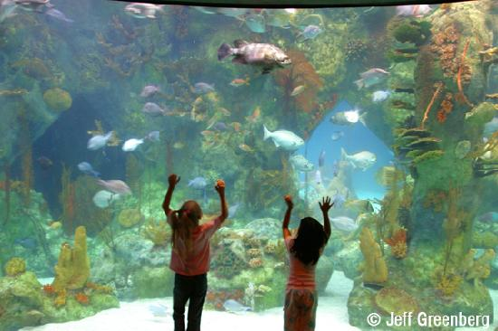 Albuquerque, NM: The Aquarium at the ABQ BioPark