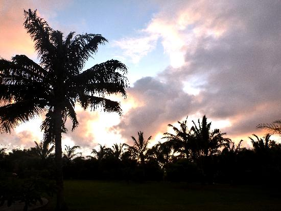 Maui Ocean Breezes: palms around ocean`s breezes