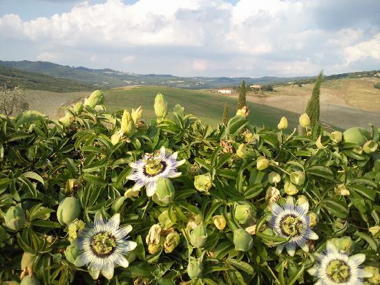 Agrihotel Il Palagetto: la passiflora