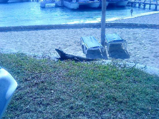 Hotel Dos Playas Beach House: Local resident!