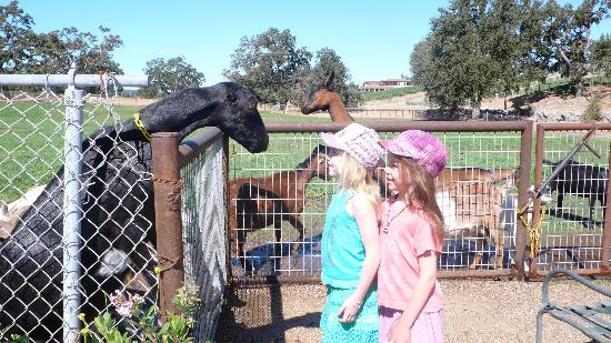 Inn Paradiso: kids loved this petting zoo