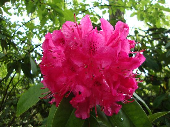 VI at Rosedale on Robson: flowers in Stanley Park