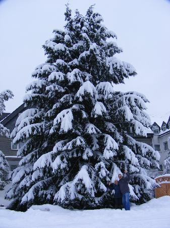 Sporthotel Landhaus Wacker: Christmas tree
