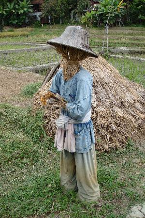 The Dhara Dhevi Chiang Mai : Scarecrow from the pedi fields