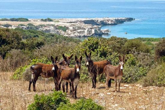 Dipkarpaz, Chypre : The Karpaz Donkeys