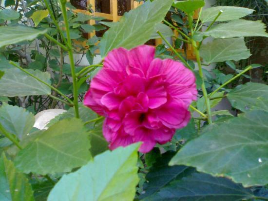 Amon Hotel Luxor: garden