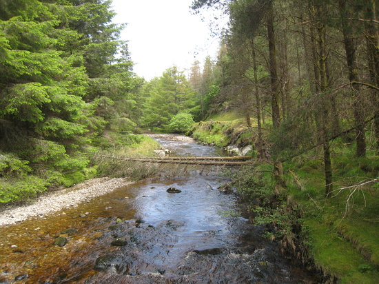 Letterkeen Loop Walk: The wooded stream in Letterkeen