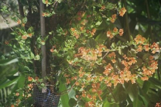 Playa Bluff Lodge : prachtige flora en fauna