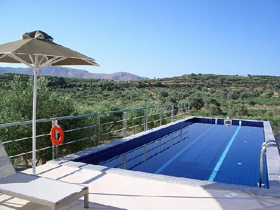 Niriida Guest House: Pool with a view surrounded by olive trees