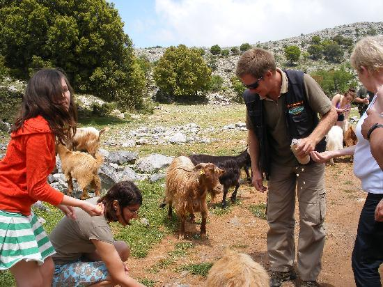 Safari Club Crete: Feeding the goats