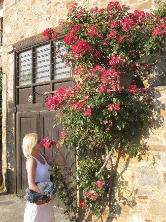 Sithonia, กรีซ: Ситония