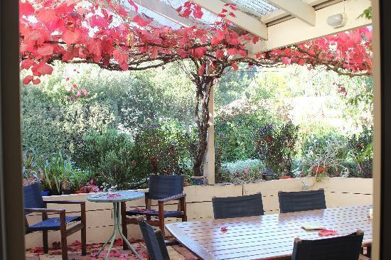 Bellevue Bed & Breakfast McLaren Vale: The courtyard from the dining/breakfast table