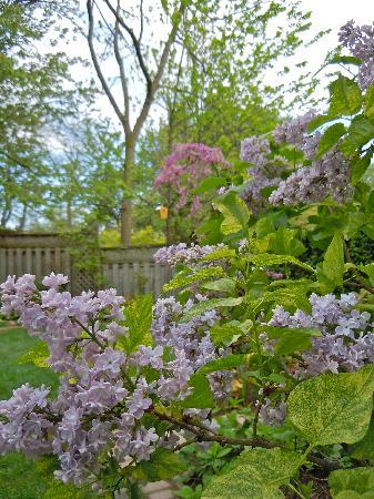Lakelands Bed and Breakfast: More of the Perennial Garden