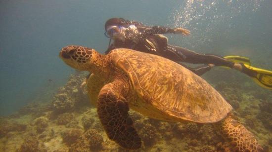 Oahu Diving: amazing!!!