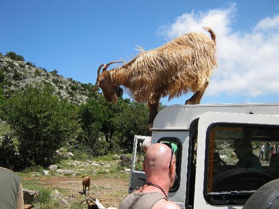 Safari Club Crete: Debra at Goat Valley.