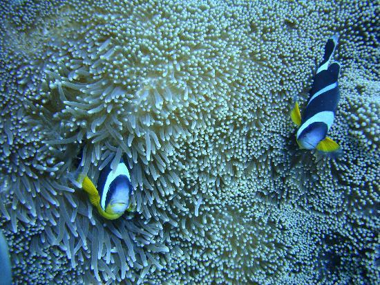 The Oberoi, Mauritius: Anenomes