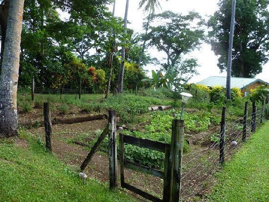 Nakia Resort & Dive: Garden