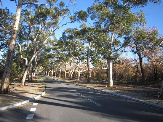 Kings Park & Botanic Garden: Kings Park