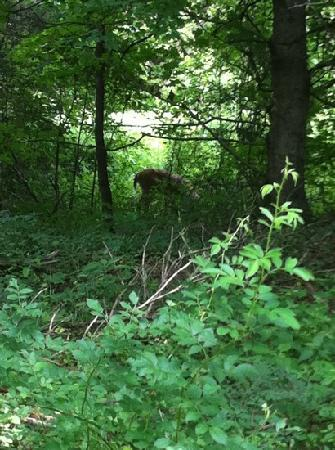 Jesse James Riding Stables: deer on our trail