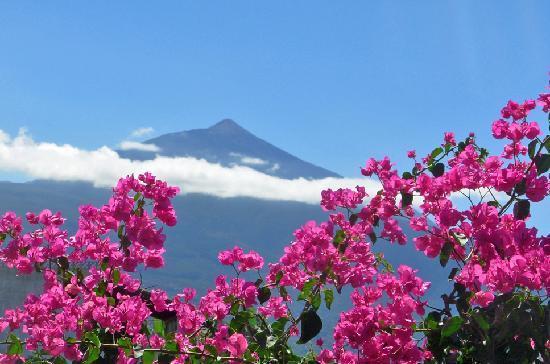 Santa Ursula, สเปน: Finca Casa-Vieja mit Blick auf den Teide