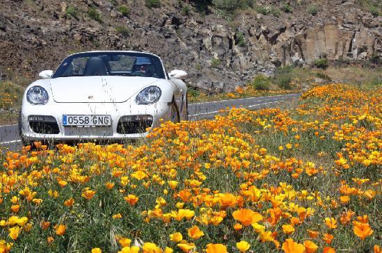 Santa Ursula, Ισπανία: Nur für Hausgäste das Porsche Boxster Cabrio