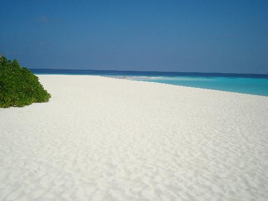 Angaga Island Resort : Stunning.