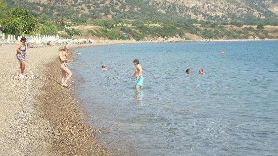 Aphrodite Beach Hotel: The pebbled beach