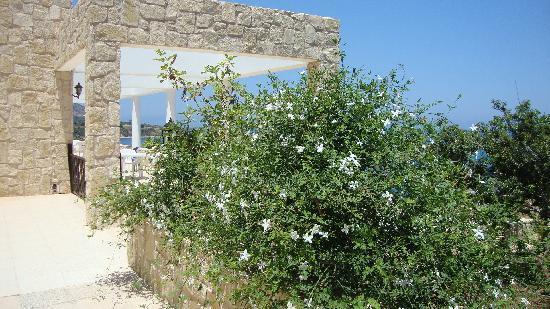 Aphrodite Beach Hotel: Jasmine on the premises