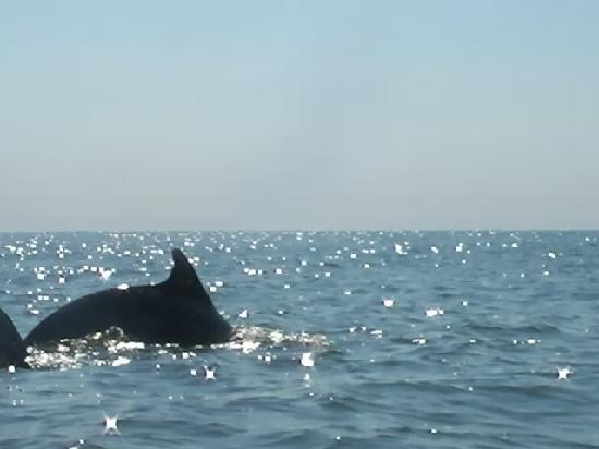 Sunset Dolphin Kayak Tours Virginia Beach