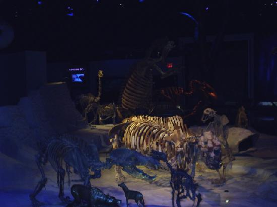 Florida Museum of Natural History: fossils