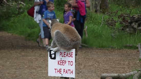 Manor Wildlife Park: walk with the lemurs