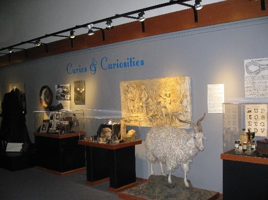 "Douglas County Museum of History & Natural History: Roseburg museum - ""Curious & Curiosities"" room"