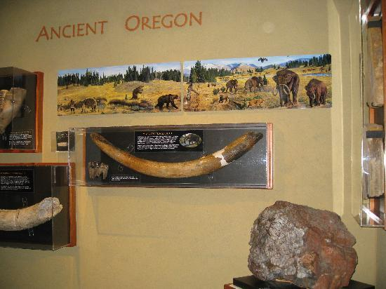‪‪Douglas County Museum of History & Natural History‬: Roseburg museum - fossil exhibit‬