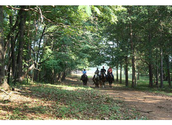 Southern Cross Ranch: riding under the trees