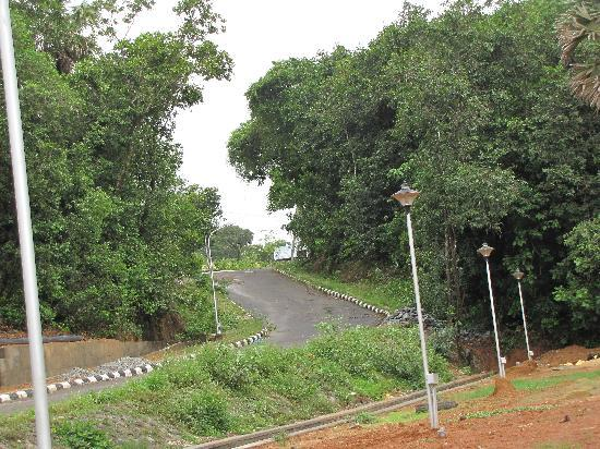 Mangalore, Inde : The hilly roads guarded by the trees