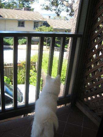 Horizon Inn & Ocean View Lodge: Our dog enjoying the view
