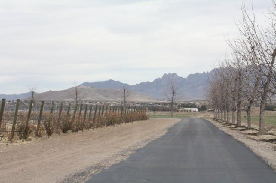 Rio Grande Vineyards and Winery: Road to the vineyard