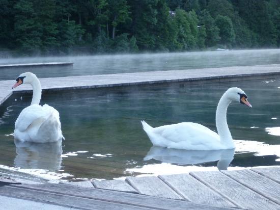 Pension Zaka: swanning around