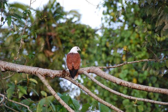 Dan Irby's Mangrove Adventures: ...but also beautiful birds...
