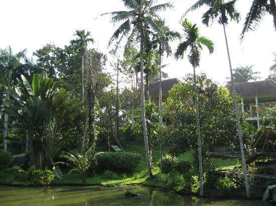 Hotel Deli River: The pond with palm trees and the cottages in the background