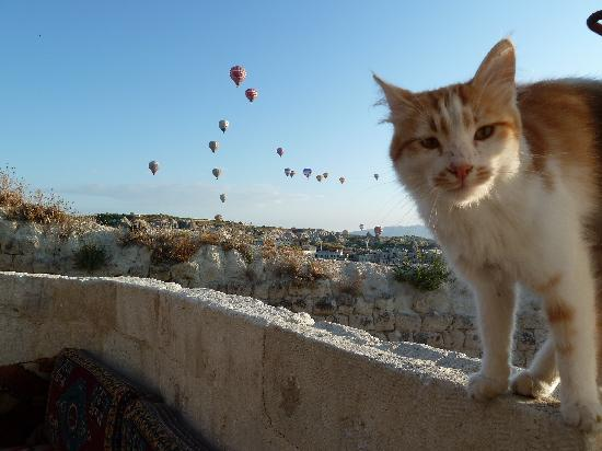 Aydinli Cave Hotel: Hotel cat ponders the view of balloons over Goreme