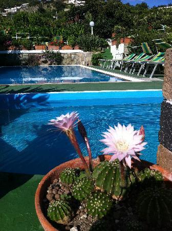 Hotel Villa Janto : fiore sulla piscina