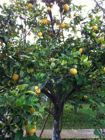 Kiyi Pansiyon : Im Garten
