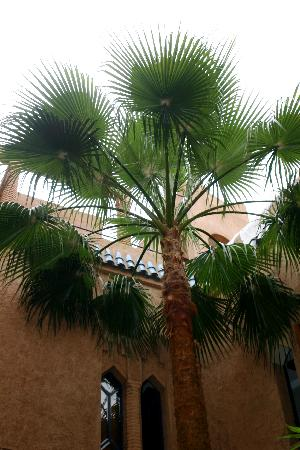 Riad Zahir : Palmier intérieur