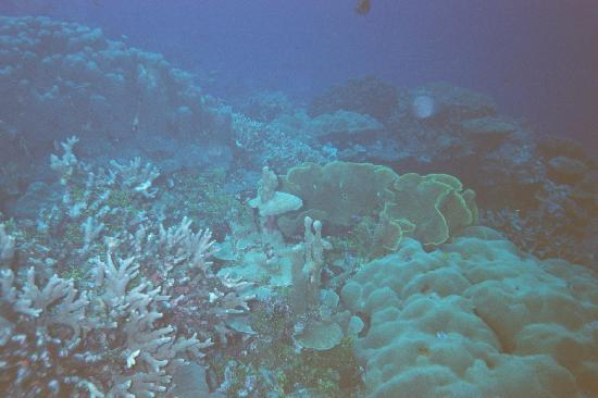 Kosrae Village Ecolodge & Dive Resort: Healthy reefs.